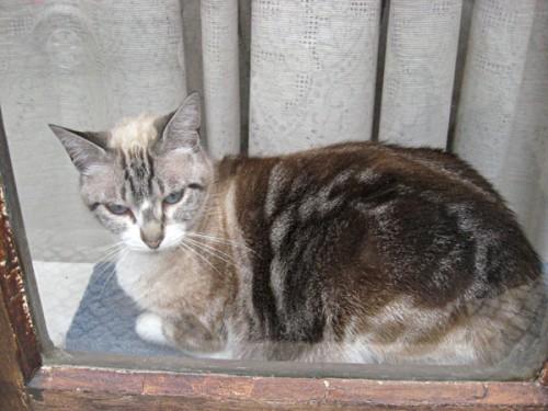Ce mananca o pisica sterilizata? Cum o ferim de obezitate?