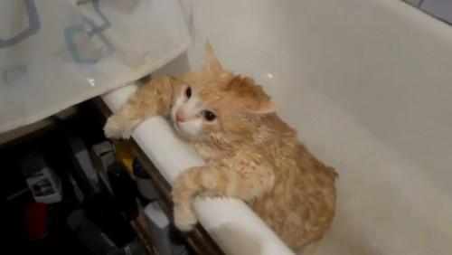 Apa, esențială pentru pisici, pe timp de vară
