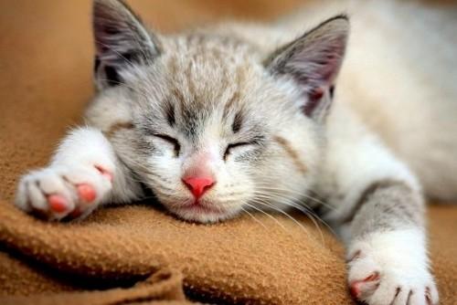 O pisica iti poate vindeca boala?
