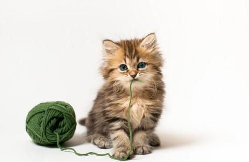 Te pot face VIOLENT, imaginile cu pisicute dragalase?