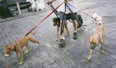 Esti ocupat si cauti pe cineva sa-ti plimbe cainele? Sau poate o bona care sa stea cu el?