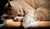 Stiati ca…o transfuzie de sange de la un caine a salvat viata unei pisici?