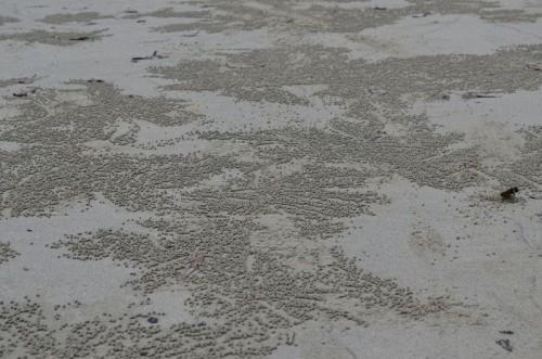sand10
