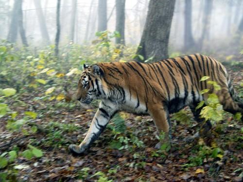 Uite ce vedetă internațională îi sfătuiește pe admiratorii săi să iubească animalele