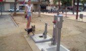 """Spaniolii au scapat de """"norocul"""" de pe strazi! Toalete publice pentru caini!"""