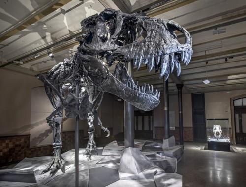 Schelet de dinozaur, vechi de 66 de milioane de ani, expus la Berlin