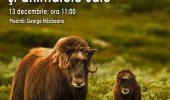 Intalnire cu Dodi si Roni: Tundra arctica si animalele sale