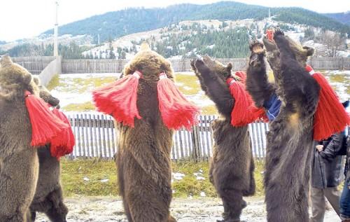 Obiceiuri si traditii de sfarsit de an: vremea caprei si a ursului!