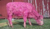 Pentru copii, in zi de sarbatoare: Povestea animalelor colorate!