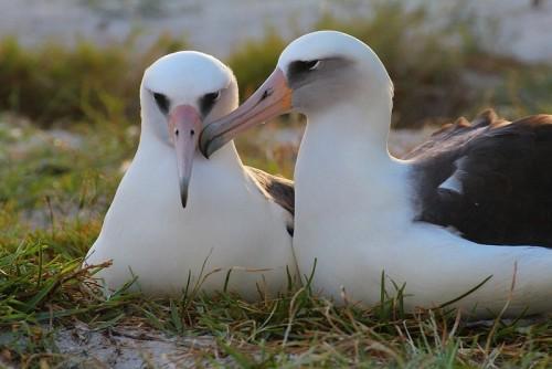 wisdom-albatross-3