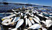 Guanabara Bay, plin de pesti morti!