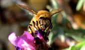 Petitie pentru salvarea albinelor