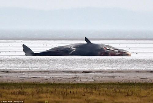 Să aibă SOARELE legătură cu eșuarea balenelor?