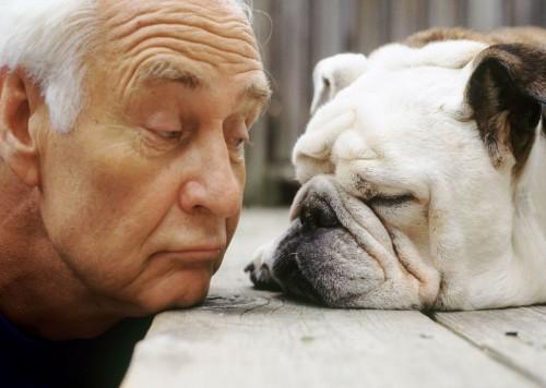 S-a stabilit de catre cercetatori, fara nici un dubiu: cainii au capacitatea de a percepe emotiile umane