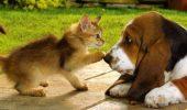 Vrei să ai și pisica și câine? Uite cum poți face să devină PRIETENI