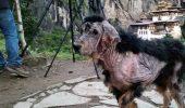 TRANSFORMAREA ULUITOARE a unui caine abandonat in munti!