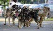 Un copil de 8 ani din Turda, SFÂȘIAT de câini! Starea lui este critică