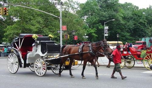 Numarul trasurilor cu cai din Central Park/New York va fi redus la jumatate