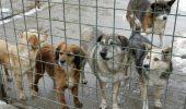 Mobilizare generala in randul iubitorilor de animale!