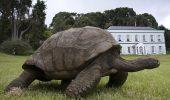 O broasca testoasa are 183 de ani si este cel mai batran animal de pe Pamant
