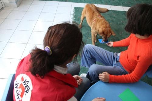 A fost deschis primul Centru de terapie asistata de animale in care sunt folositi caini comunitari