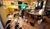 O femeie din Statele Unite are 1.000 de pisici