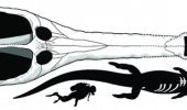"Fosila de ""mega crocodil"", gasita in Sahara"