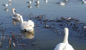 Dragostea pluteste pe Lacul Tabacarie, din Constanta!