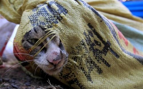 IMAGINI SOCANTE: Piata de carne de pisici in Vietnam!