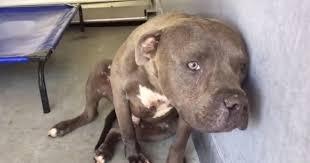 """ȘOCANT! Povestea lui Traian, un câine ARUNCAT  pentru că nu era """"BUN LA LUPTE""""!"""