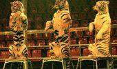 Animalele sălbatice de la circ nu sunt în vacanță!
