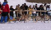 S-a deschis sezonul competitiilor de atelaje canine!