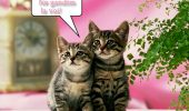 sursa foto - http://www.felicitarialese.ro