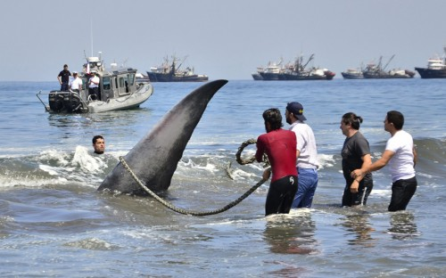 foto balena1