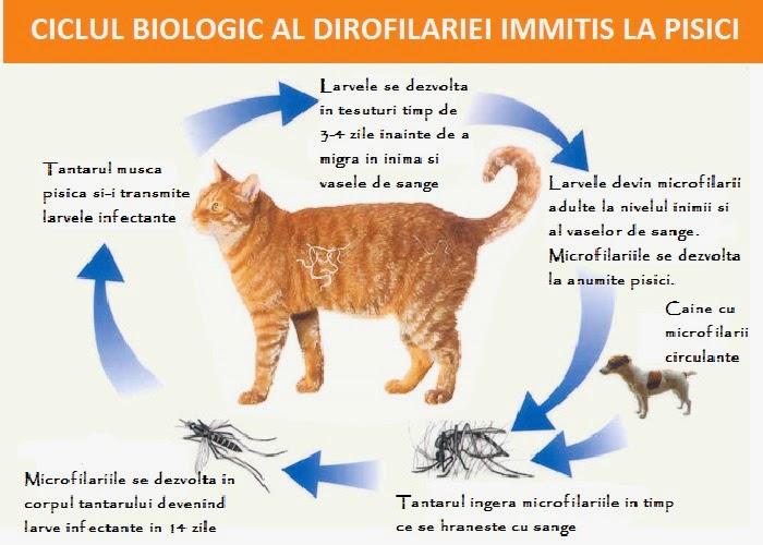 injecție de pisică de vierme)