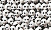 Cainele, intrus printre ursii panda!!