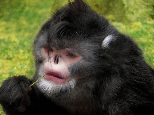 Cele mai CIUDATE ANIMALE descoperite in 2015!