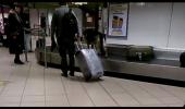 Un agent de toata isprava: NATA, cainele de frontiera din Aeroportul Otopeni