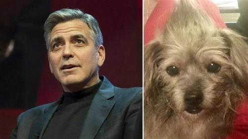 George Clooney a mai adoptat un caine
