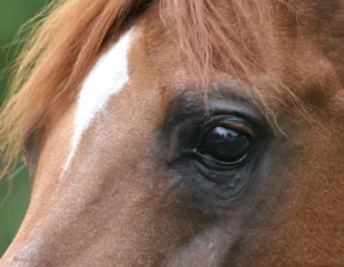 Calul ca animal de companie – costuri de îngrijire uriașe, satisfacție pe măsură