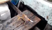 PESTELE CARE FUMEAZA – O gluma NESARATA a unor pescari, care ii socheaza pe iubitorii de animale!