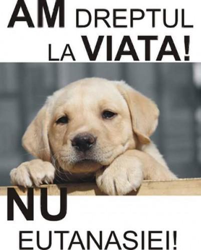 Protest impotriva maltratarii animalelor!