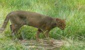 INEDIT: pentru salvarea speciilor pe cale de disparitie!