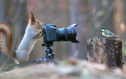 foto: Vadim Trunov/Solent News/REX/Shutterstock