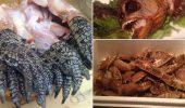 Mancatorii de salamandre, scorpioni si crocodili