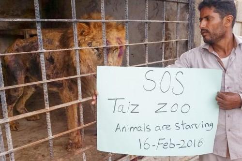 Apel disperat al unui voluntar, pentru salvarea animalelor!