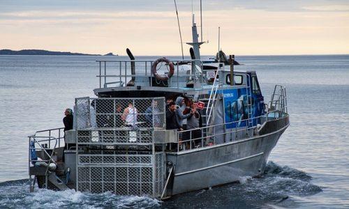 Locuitorii unui oras din Noua Zeelanda, speriati de atacurile rechinilor albi