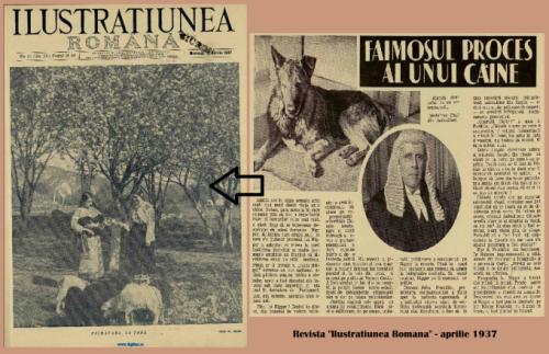 Cum a pledat stapanul unui caine pe care juratii l-au condamnat la moarte?