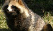 Unul dintre cele mai ciudate animale din lume este exponatul acestei luni, la Muzeul Judetean Arges