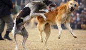 Asa, DA! Din acest an, FBI va investiga cazurile de abuz impotriva animalelor